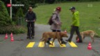 Video «Kurse für Hundehalter – umstrittene Wirkung» abspielen