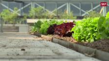Link öffnet eine Lightbox. Video Brüssel hat eine Pionier-Rolle bei Urban-Farming abspielen