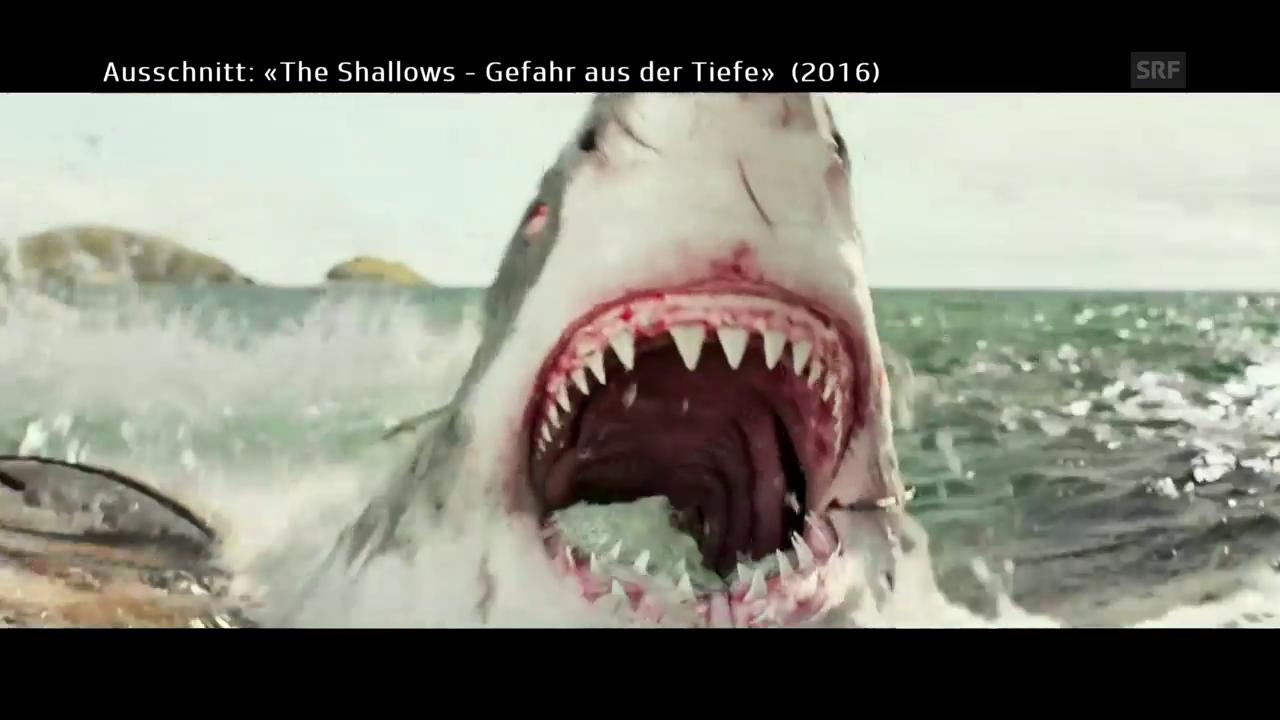 Haie und Blut