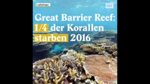 Video «Das Great Barrier Reef liegt im Sterben» abspielen