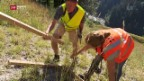 Video «Erosionsschutz mit Holzwolle» abspielen