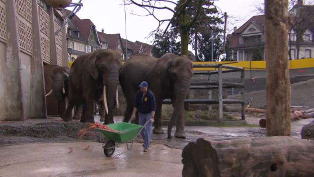 Video «Eine Tierflüsterin für die Elefanten im Zoo» abspielen