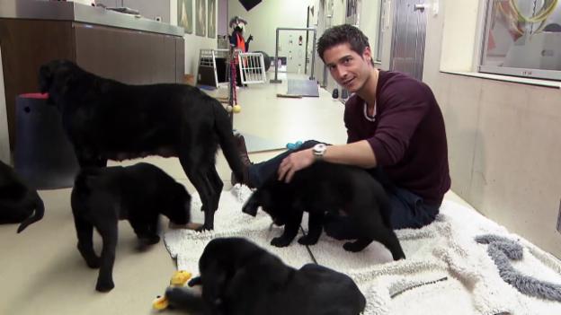 Video ««Einstein»-Spezial: Der Hund – des Menschen bester Freund?» abspielen