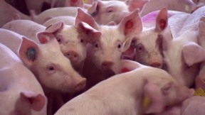 Video «Gefährliche Antibiotika» abspielen