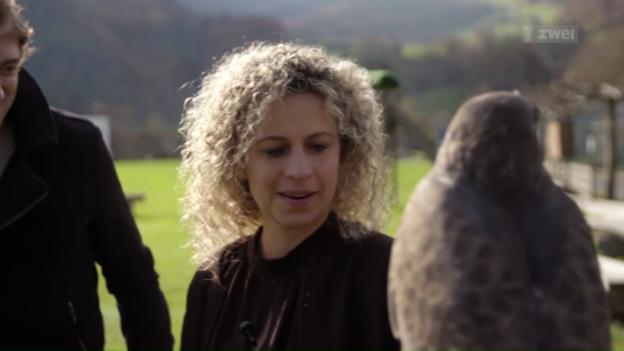 Video «Tierphobien – Die Gefahr kommt vom Himmel wie vom Boden» abspielen