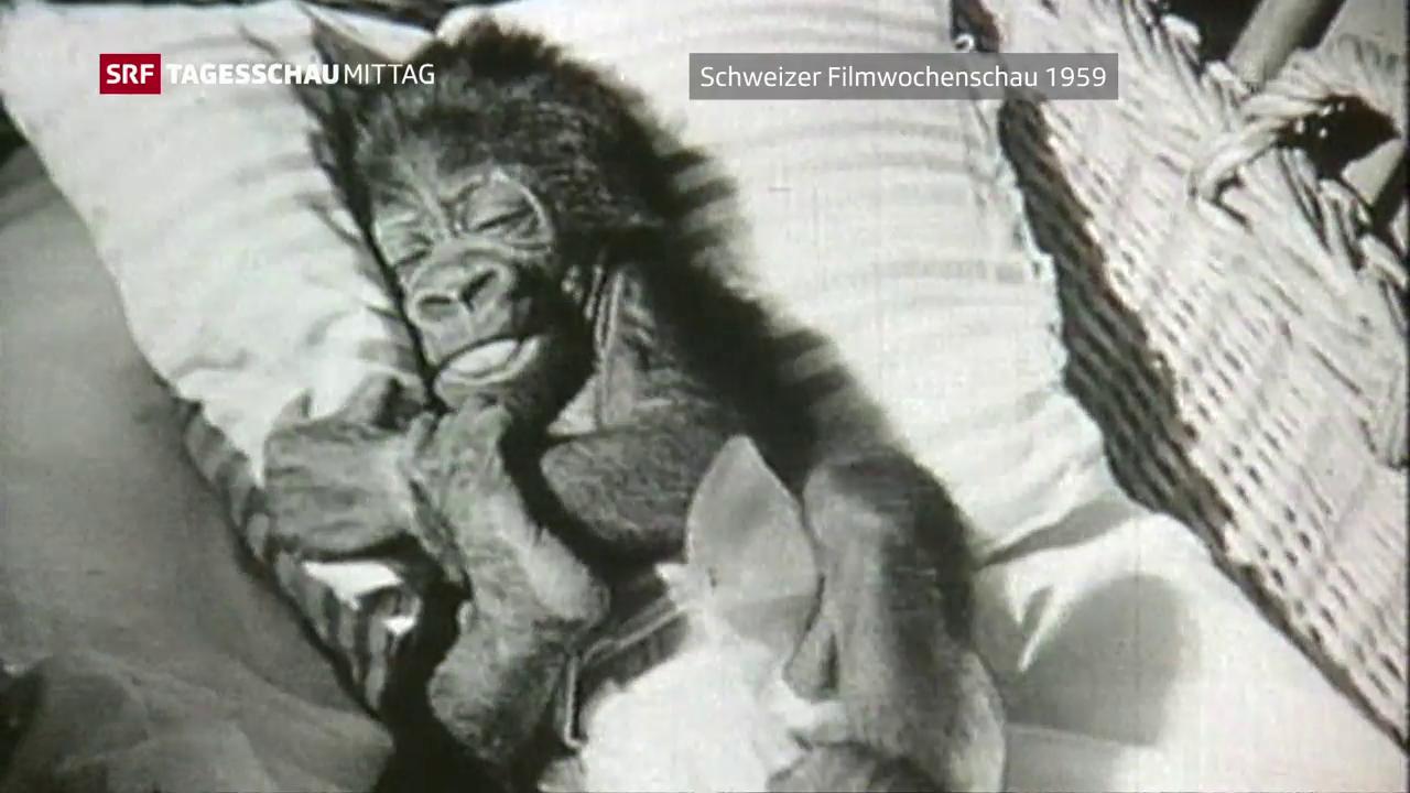 Gorilladame Goma ist gestorben