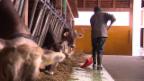 Video «Direktzahlungen: Bauern produzieren am Markt vorbei» abspielen