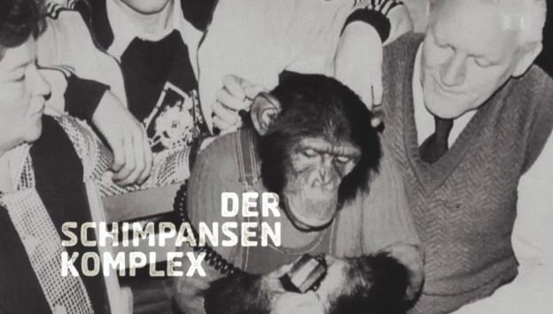 Video «Der Schimpansen-Komplex» abspielen