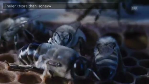 Video «Trailer «More than Honey»» abspielen
