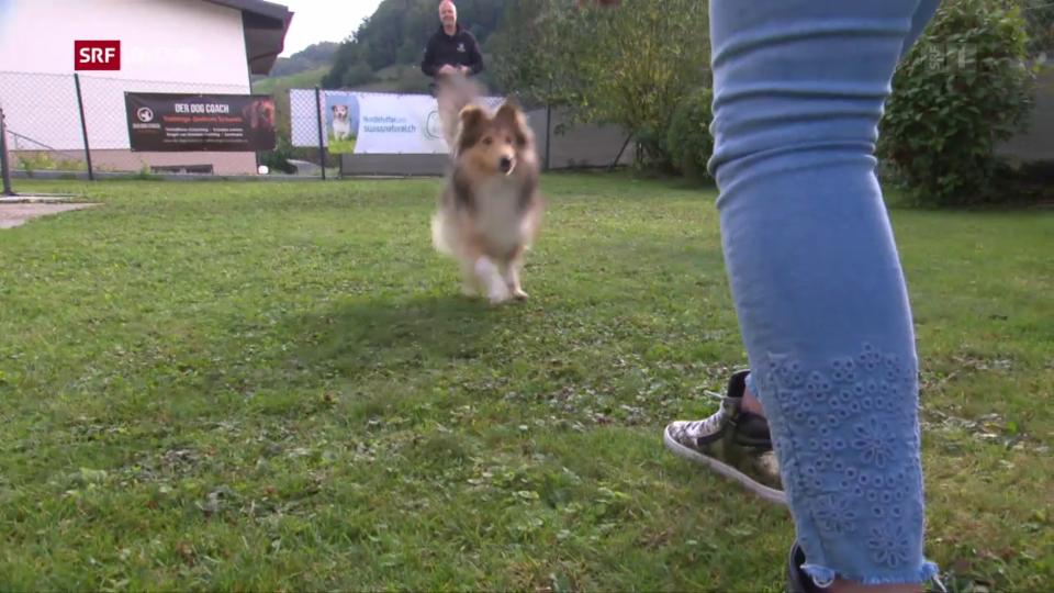 Aus dem Archiv: Hunde beissen öfter zu