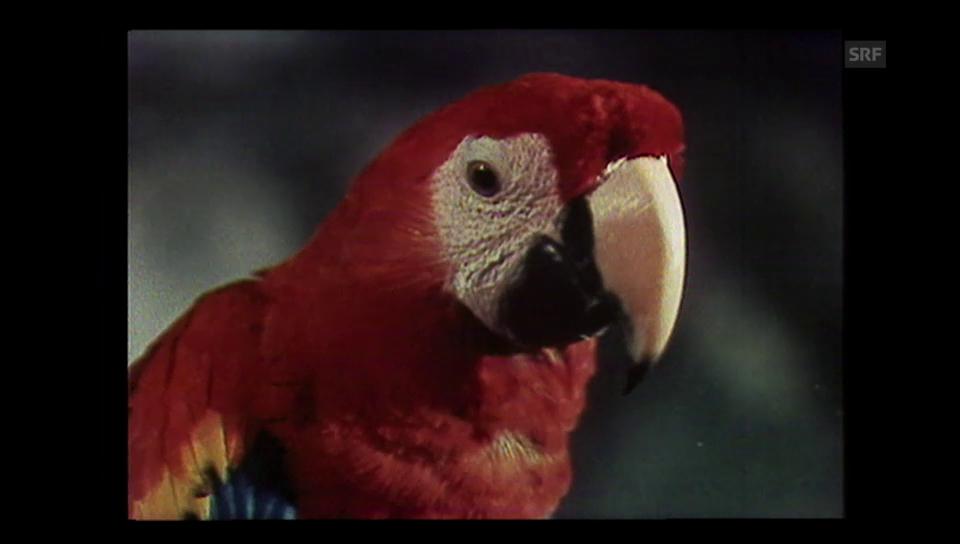 Der Papagei von Pippi Langstrumpf