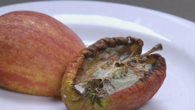 Video «Foodwaste - Apfelmus statt Abfall» abspielen