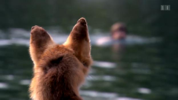 Video «Wie ein Fuchs über das Leben in der Stadt denkt» abspielen