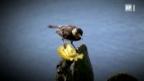 Video «Darwin und die Spottdrosseln» abspielen