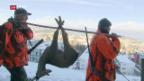 Video «Wenn Jäger im Stadtwald jagen» abspielen