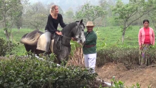 Video «Darjeeling: Ausritt auf der Teeplantage» abspielen
