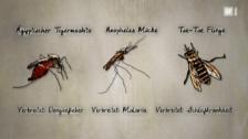 Video «Mit Gentech-Mücken gegen Tropenkrankheiten» abspielen