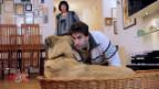Video «Hundeflüsterer» abspielen