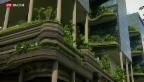 Video «FOKUS: Hitzeresistente Gebäude» abspielen