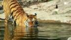 Video «Wir und der Zoo» abspielen