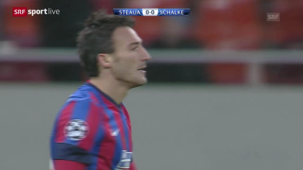 Fussball: CL, Steaua Bukarest - Schalke («sportlive»)