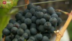 Video «Mehr Transparenz in Weinbranche» abspielen