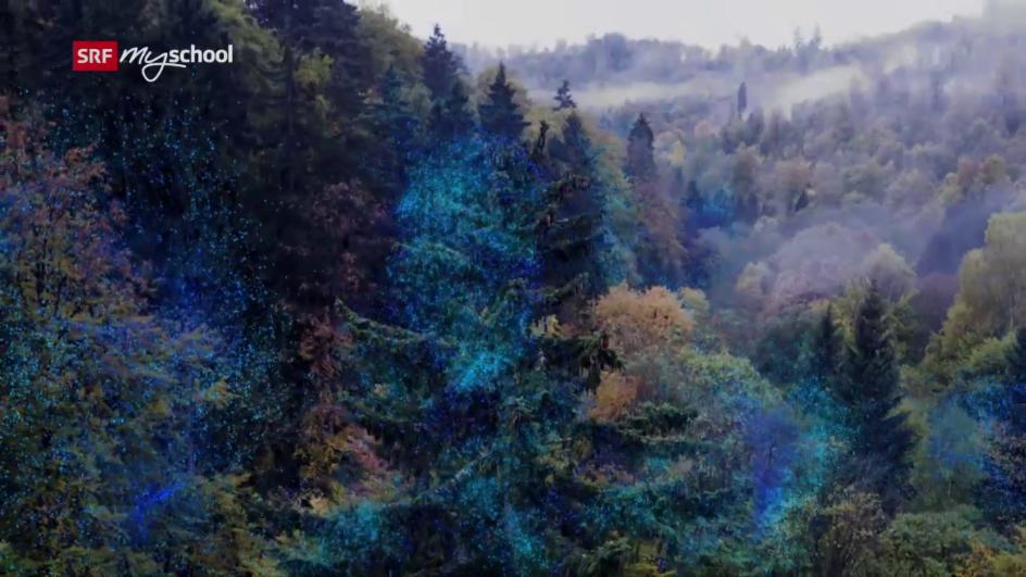 Video «Unsere Wälder: Die Sprache der Bäume (1/3)» abspielen