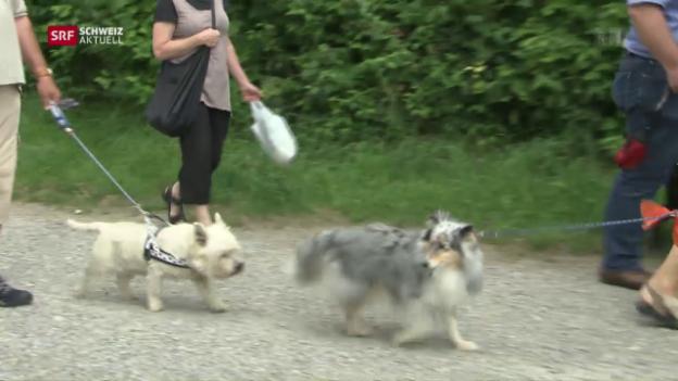 Video «Schweiz aktuell vom 02.08.2016» abspielen