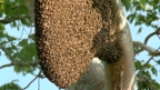 Video «La Ola im Bienenstock» abspielen