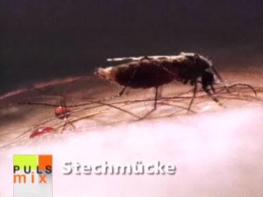 Ultraschall hält Mücken nicht vom Stechen ab