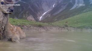 Video «Wild Cam: In der Hirschsuhle» abspielen