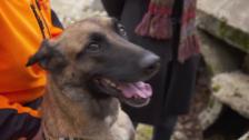 Video «Redog: Mensch und Hund im Einsatz» abspielen