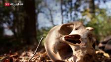 Link öffnet eine Lightbox. Video Tod – Eine Reise durchs Leben: Der physische Tod (1/5) abspielen