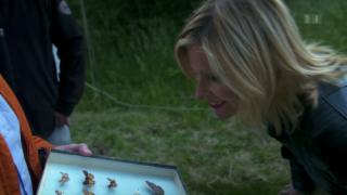Video «Falterfang und Fischerfrust» abspielen