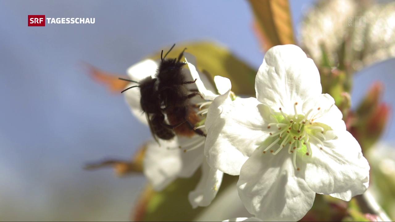 EU handelt wegen Bienensterben