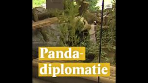 Video «Pandadiplomatie» abspielen