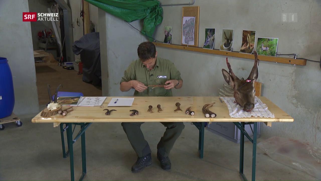 Zahlreiche Fehlabschüsse bei Bündner Jägern