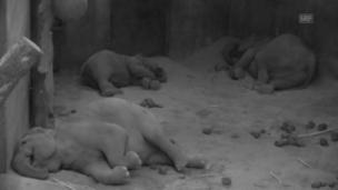 Video «Indi, Ceyla und Omysha: nachts um 04:00 Uhr» abspielen