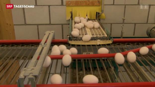 Video «Sollen das Eierkontingent erhöht werden?» abspielen