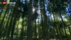 Video «Schweizer Wald im Zeitalter des Klimawandels» abspielen