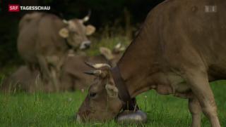Video «Schlechter Sommer machte den Tieren zu schaffen» abspielen