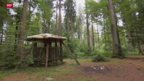 Video «Grosse Waldbrandgefahr» abspielen