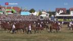 Video «Marché Concours im Jura» abspielen