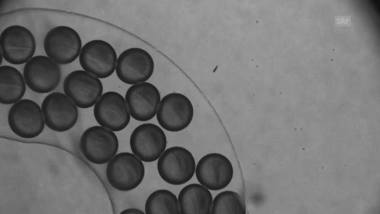 Golnaz Isapour: Nanopartikel, die sich im Inneren verändern.