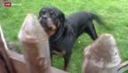 Video «Wann ist ein Hund übermässig aggressiv?» abspielen