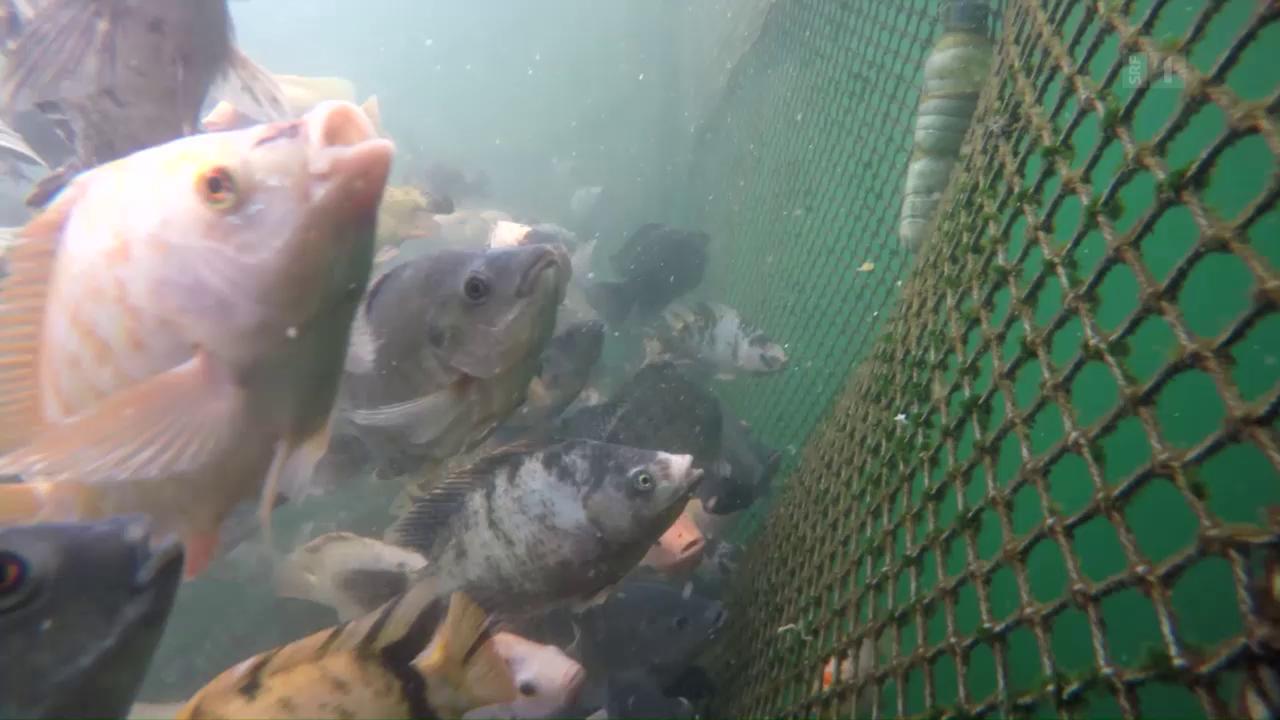 Massenzucht statt Fischparadies: Das ASC-Label in der Kritik
