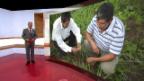 Video «Stevia: Gerechtigkeit | Farbenfabrik in Indien | Extrem-Job (3)» abspielen