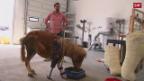 Video Pferden wird auf die Beine geholfen abspielen.