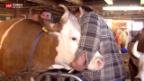 Video «Rindertuberkulose: «Wir sind sehr beunruhigt»» abspielen