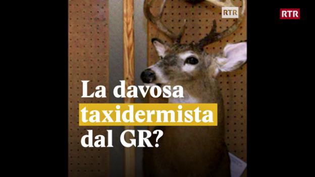 Laschar ir video «La davosa taxidermista dal GR?»